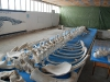 Ein Pottwal-Skelett im Museum. Wie kommt man da dran? Ganz einfach! Toten Pottwal im Hafenbecken versenken und drei Jahre (!) warten, bis Fische und Krabben die Knochen abgenagt haben