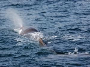 Der erste Wal des Tages